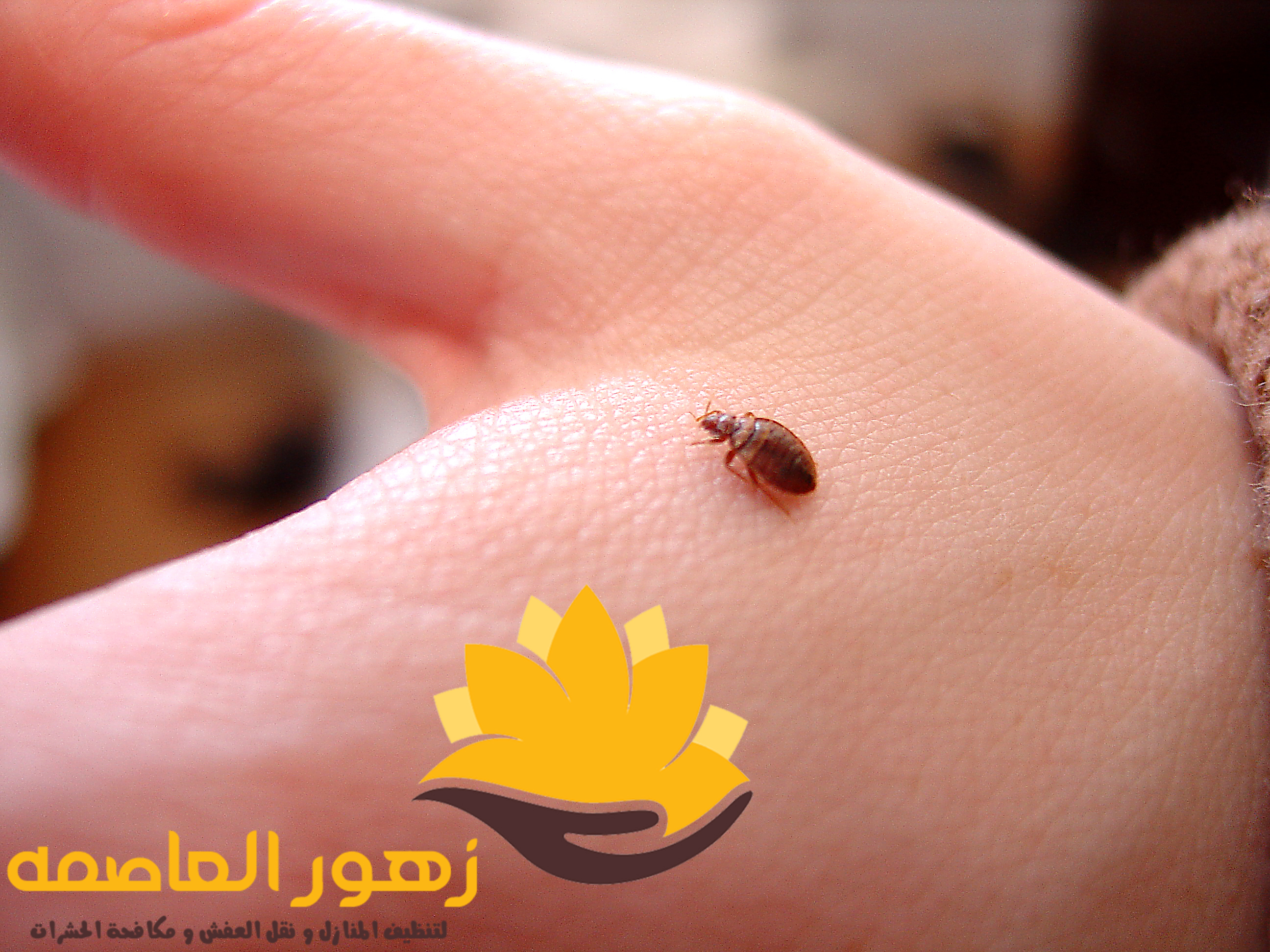 Photo of شركه مكافحه البق بالرياض
