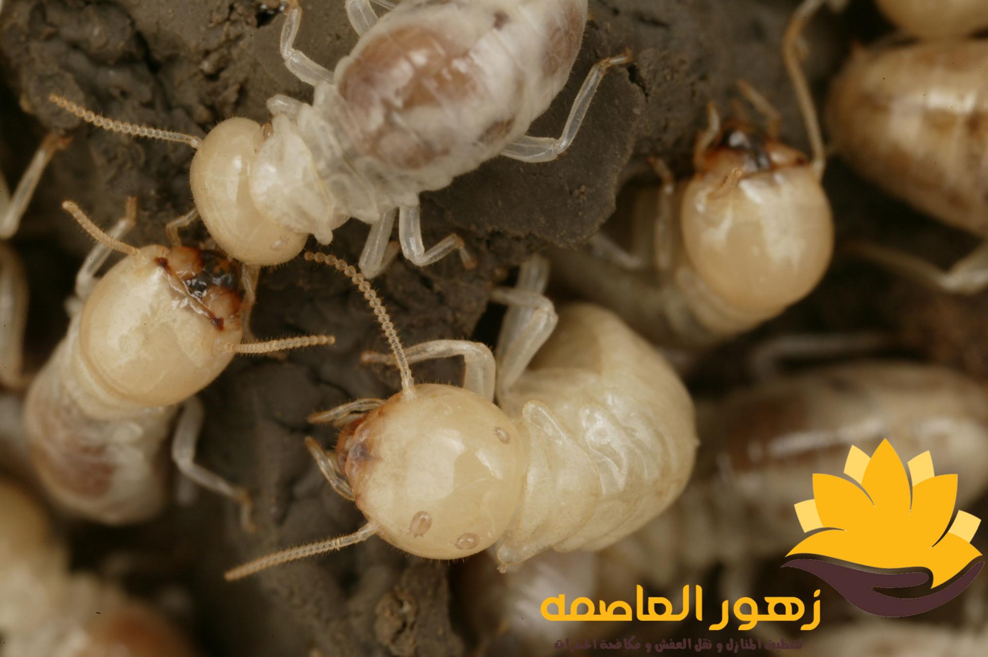 Photo of شركه مكافحه النمل الابيض بالرياض